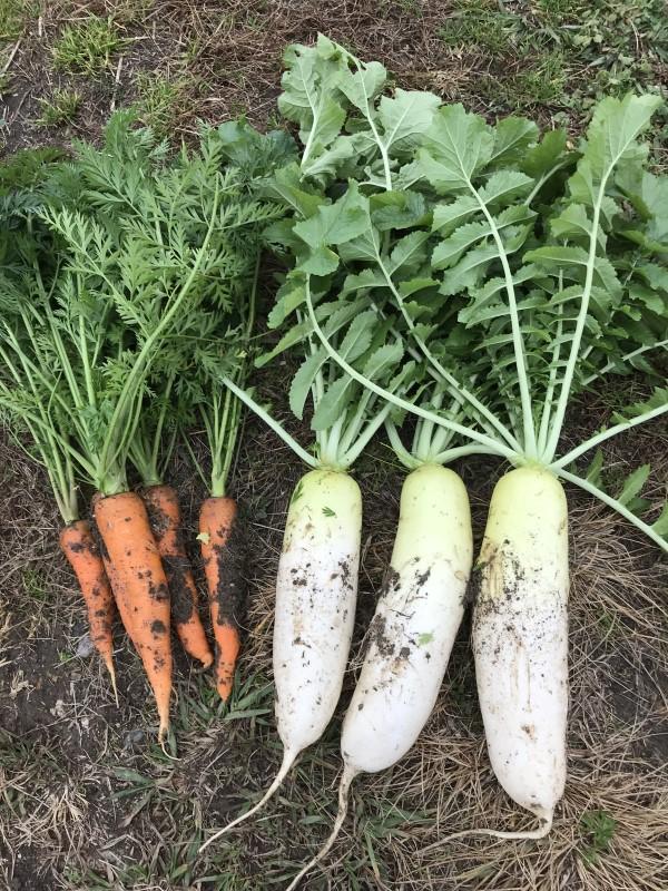 秋・冬野菜を育てよう